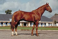 French Trotter Horse