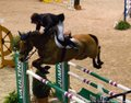 Faszination Pferd Nürnberg