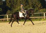 Great Rapp pony gelding for sport and leisure