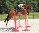 Springpferd für Amateure, Junioren, Amazonen