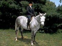 Connemara Pony Horse
