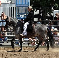 Paso Peruano Horse